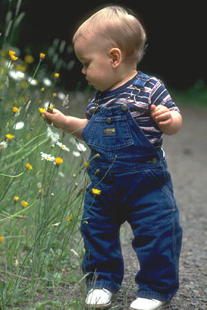 Toddler walking and looking at flowers.