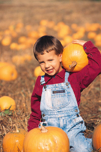 Young boy choosing a pumpkin from a pumpkin patch.